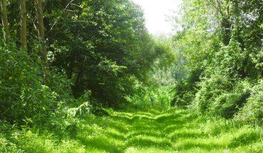 L'action de grâce et le petit chemin