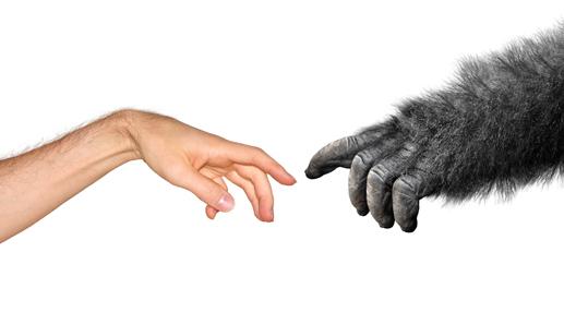 De la théorie de l'évolution et de l'idéologie du genre