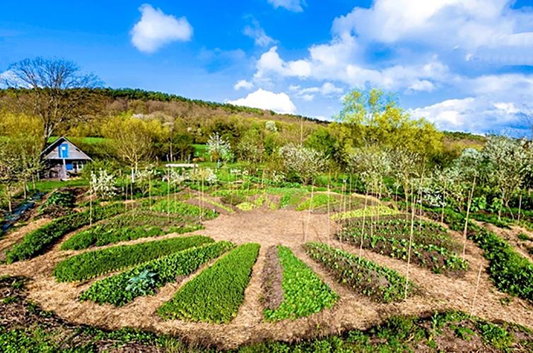 Cultiver sans eau ni pesticides !
