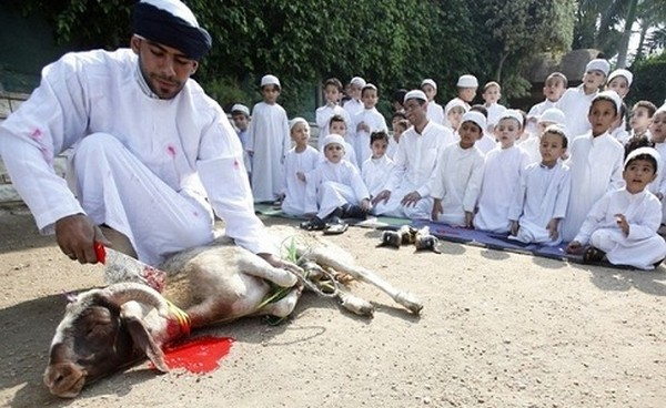 Abattage halal, ce que demande Allah…