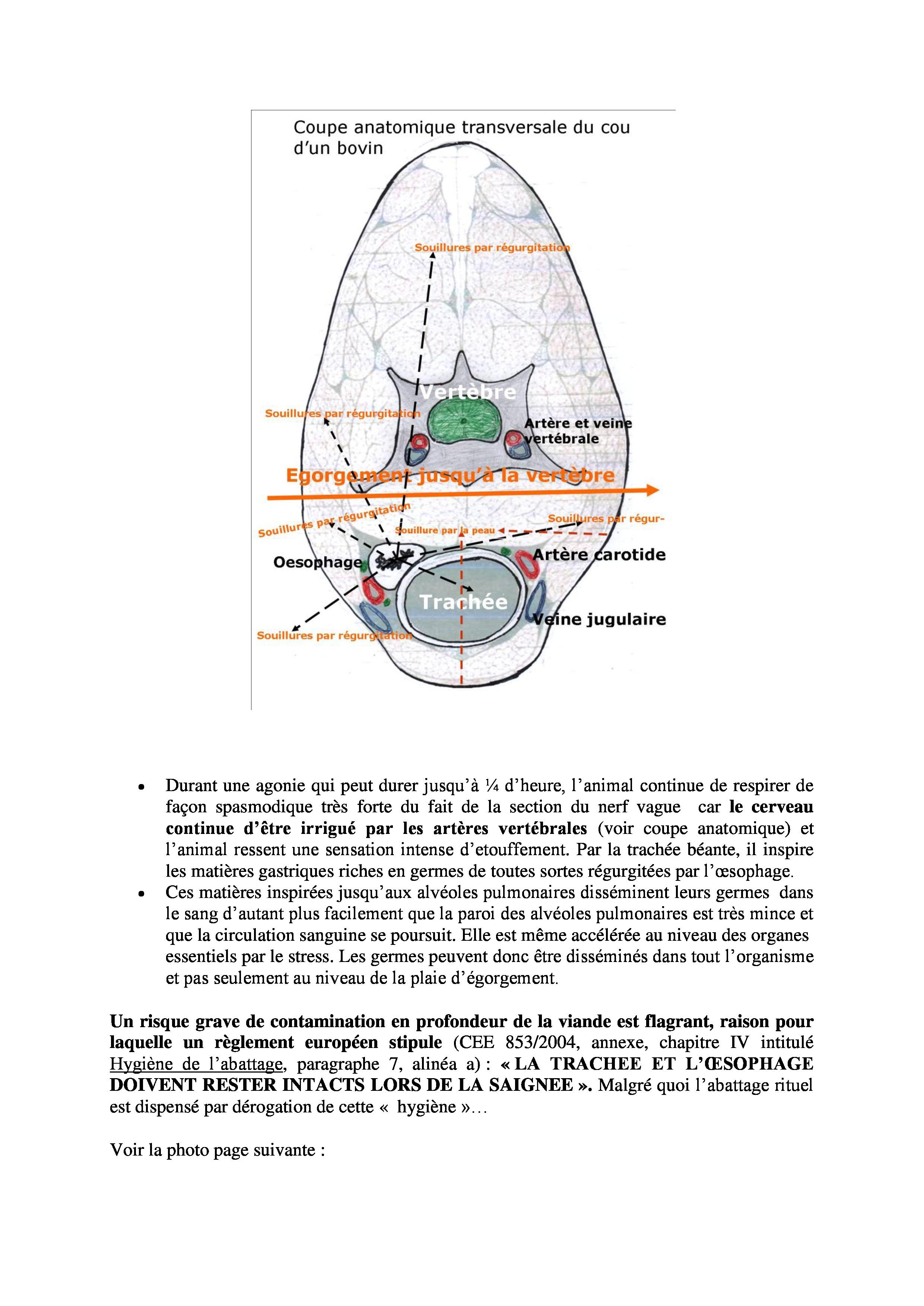 Les-risques-sanitaires-liés-à-labattage-halal-1-page-1